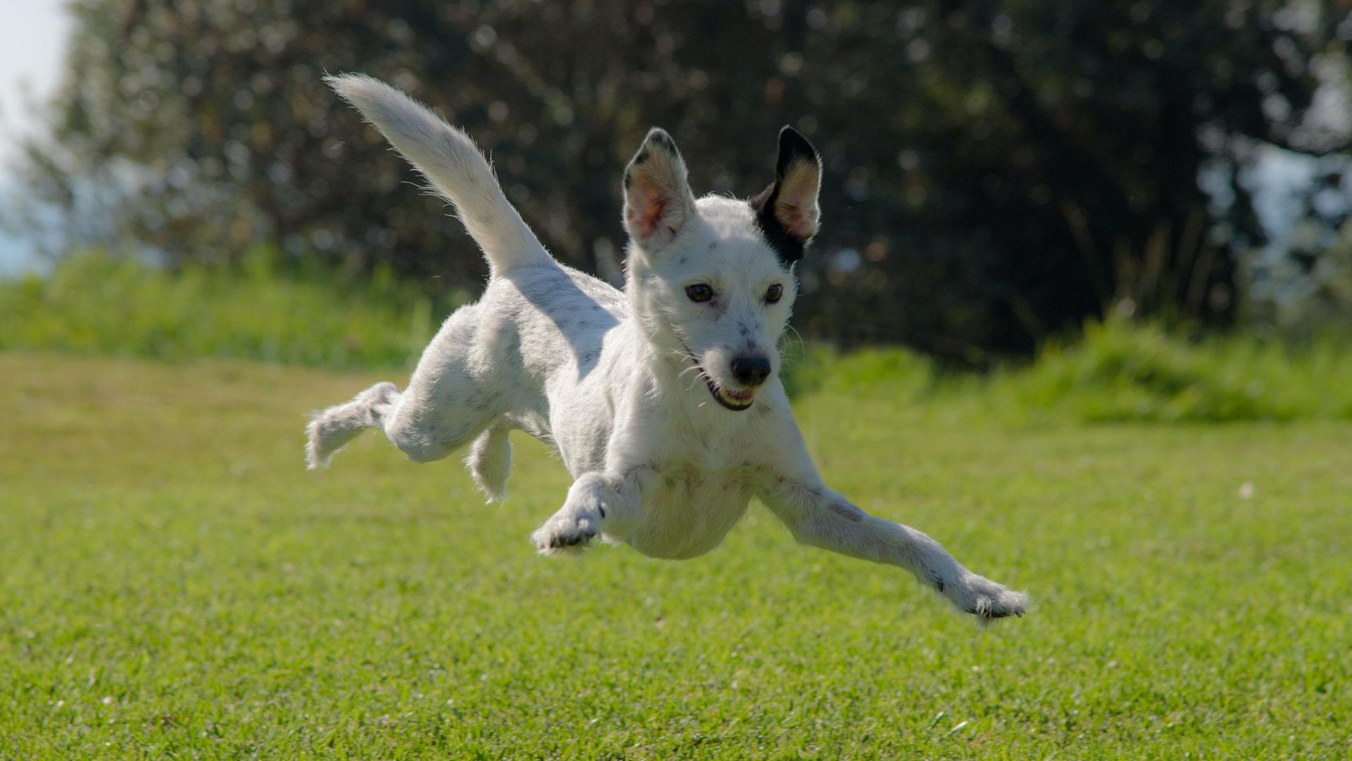 Dog playing at the Greenway Farms dog park